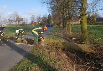Baum stürzt auf Fahrbahn in Aurich-Oldendorf