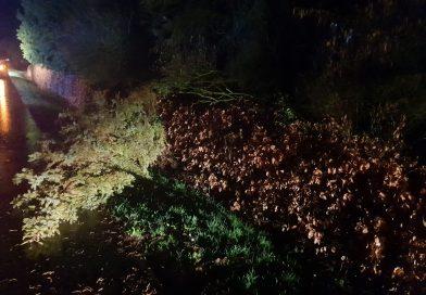 Feuerwehr Ostgroßefehn beseitigt umgestürzten Baum