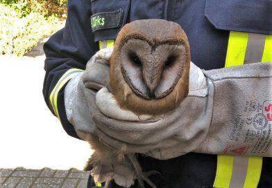 Aurich-Oldendorf: Feuerwehr rettet Eule aus Kamin